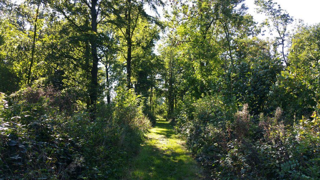 De Galgebossenroute, een boswandeling pur sang.