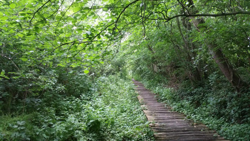 Over knuppelpaden door natuurgebied De Oude Spoorwegberm
