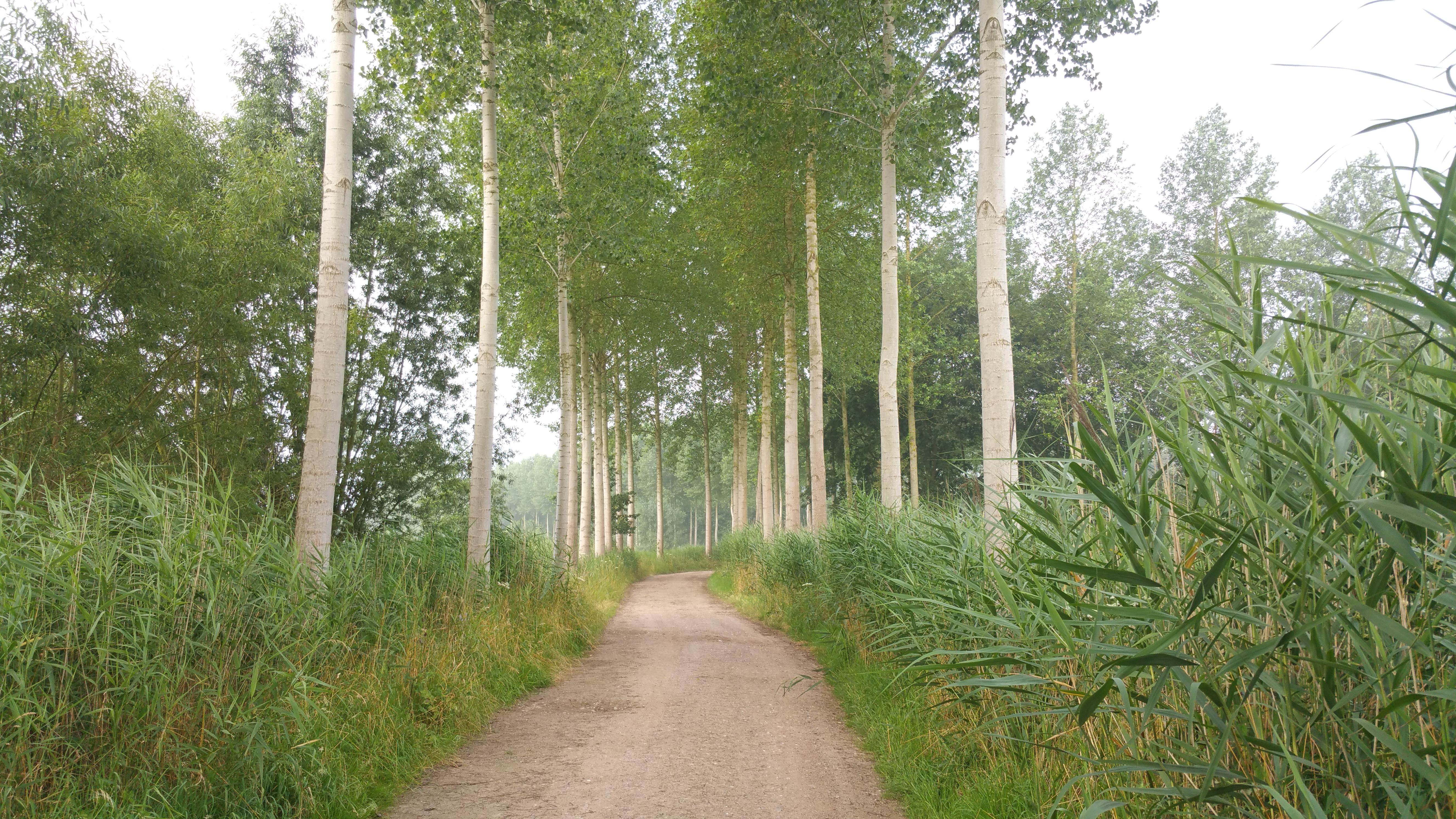 Wandlen Innen wandelen in en om het graafschap te bornem effen weg