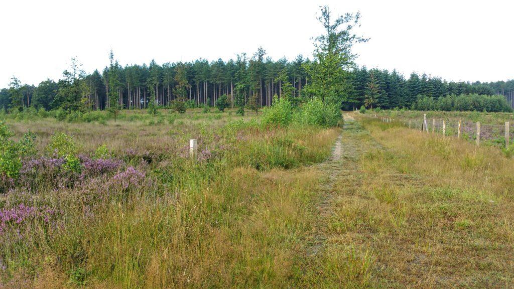 Wandelen door topnatuur in Averbode bos & heide